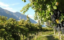 the sparkling wines in trentino8